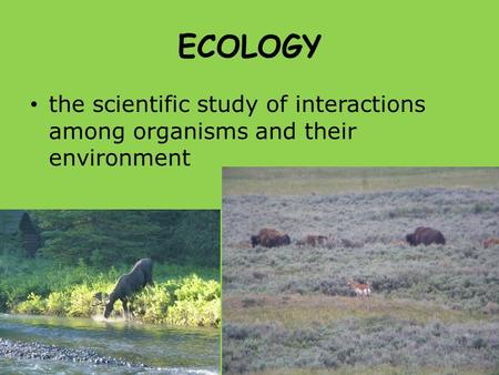 ECOLOGY the scientific study of interactions among organisms and their environment.