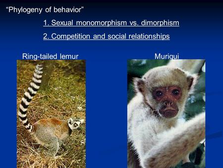 "Ring-tailed lemurMuriqui 1. Sexual monomorphism vs. dimorphism 2. Competition and social relationships ""Phylogeny of behavior"""
