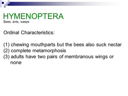Ordinal Characteristics: (1) chewing mouthparts but the bees also suck nectar (2) complete metamorphosis (3) adults have two pairs of membranous wings.