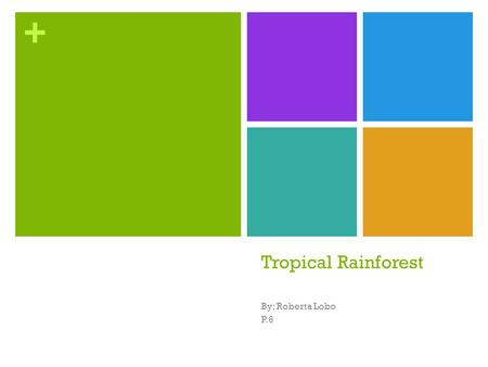 Tropical Rainforest By: Roberta Lobo P.6.