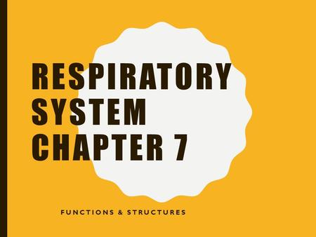 RESPIRATORY SYSTEM CHAPTER 7 FUNCTIONS & STRUCTURES.