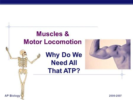 AP Biology 2006-2007 Muscles & Motor Locomotion Why Do We Need All That ATP?