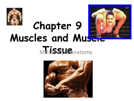Chapter 9 Muscles and Muscle Tissue Microscopic Anatomy.