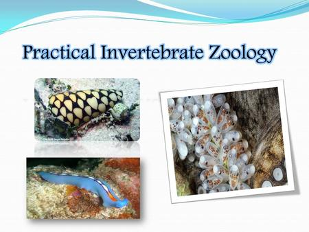 Invertebrates : are animals that do not have a backbone. Most of the animals on earth are invertebrates. Invertebrates are are cold-blooded; their body.