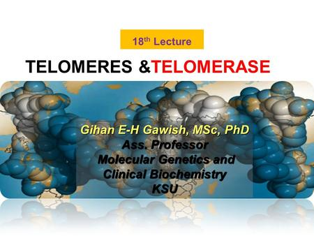 TELOMERES &TELOMERASE 18 th Lecture Gihan E-H Gawish, MSc, PhD Ass. Professor Molecular Genetics and Clinical Biochemistry Molecular Genetics and Clinical.