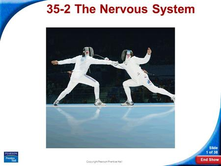 End Show Slide 1 of 38 Copyright Pearson Prentice Hall 35-2 The Nervous System.