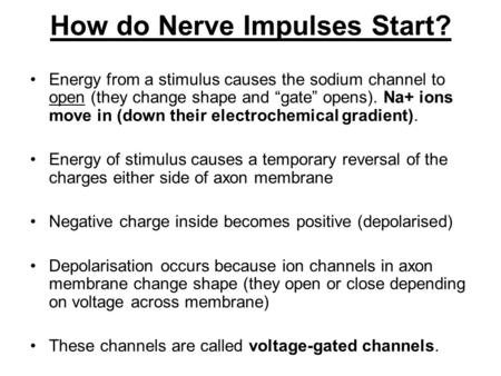 "How do Nerve Impulses Start? Energy from a stimulus causes the sodium channel to open (they change shape and ""gate"" opens). Na+ ions move in (down their."