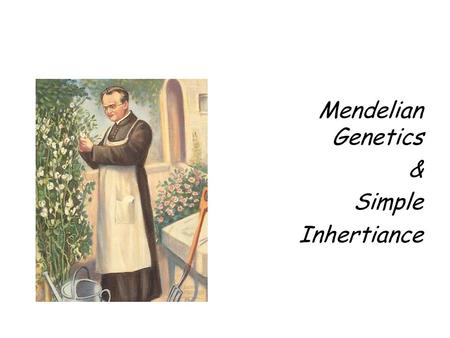 Mendelian Genetics & Simple Inhertiance. So Who's Mendel? An Austrian monk named Gregor Mendel. Mendel spent his time breeding pea plants. As he did this.