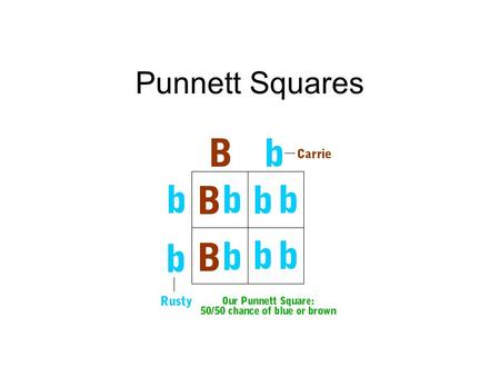 Punnett Squares. Traits P - Parental Generation Genotype: TT or tt Gametes: T or t F1 – First Filial Generation Genotype: Tt Gametes: T or t F2 – Second.