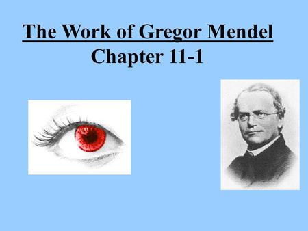 The Work of Gregor Mendel Chapter 11-1. Transmission of characteristics from _______________________is called ___________________. The _________ that.