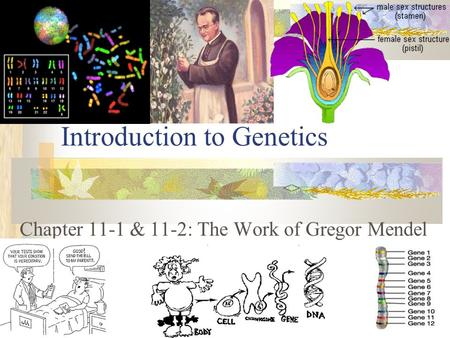 Introduction to Genetics Chapter 11-1 & 11-2: The Work of Gregor Mendel <>