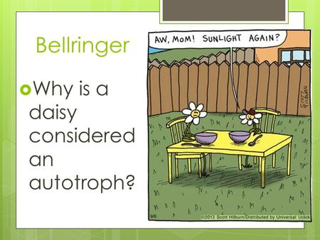 Bellringer  Why is a daisy considered an autotroph?