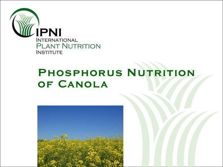 Phosphorus Nutrition of Canola. Outline: P Nutrition of Canola Photo courtesy of Canola Council of Canada What are the nutrient requirements of canola.