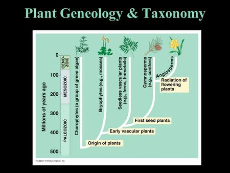 Plant Geneology & Taxonomy I. NON-VASCULAR PLANTS No special system of vessels to transport fluids internally. Examples : mosses, liverworts.