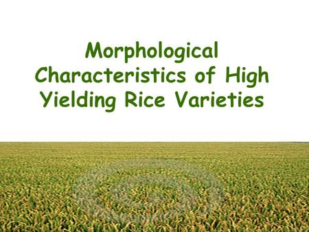 Morphological Characteristics of High Yielding Rice Varieties