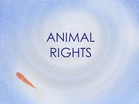 ANIMAL RIGHTS. What are the moral and ethical issues of Animal Rights. Are these cultural or global? What does the Church have to say on this matter?
