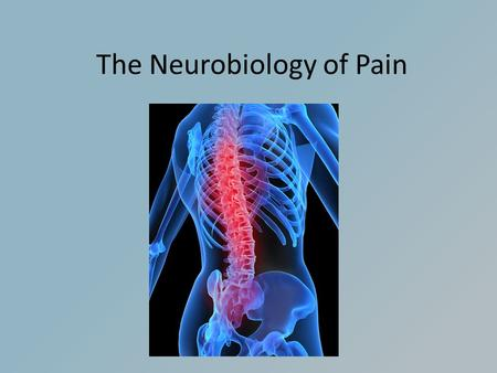 The Neurobiology of Pain. What is Pain? Pain is part of the body's defense system. The reflex reaction to escape painful stimulus is meant to adjust behavior.