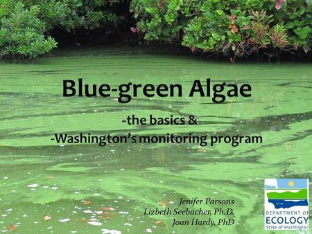 Blue-green Algae -the basics & -Washington's monitoring program