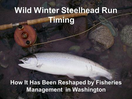 Wild Winter Steelhead Run Timing How It Has Been Reshaped by Fisheries Management in Washington.
