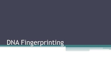 "DNA Fingerprinting. Introduction to DNA Fingerprinting Technicians in forensic labs are often asked to do DNA profiling or ""fingerprinting"" Restriction."