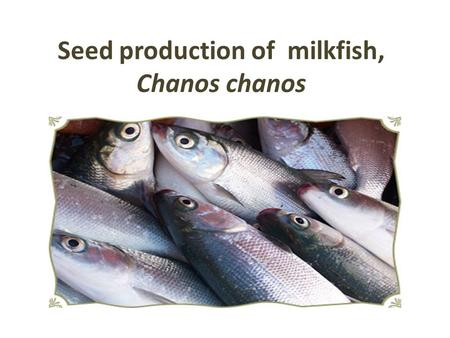Seed production of milkfish, Chanos chanos. Distribution and importance: Milk fish belongs to the family Chanidae and Order Clupeiformes Distributed in.