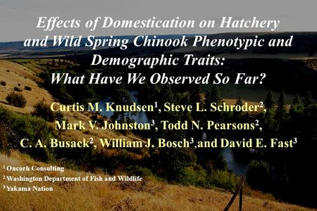 Effects of Domestication on Hatchery and Wild Spring Chinook Phenotypic and Demographic Traits: What Have We Observed So Far? Curtis M. Knudsen 1, Steve.