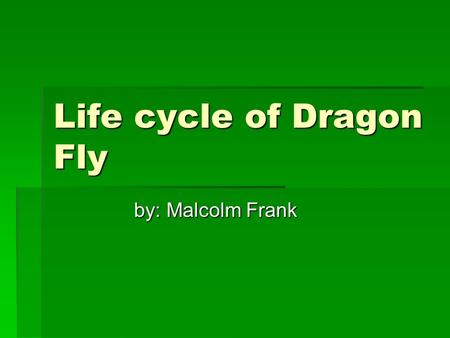 Life cycle of Dragon Fly