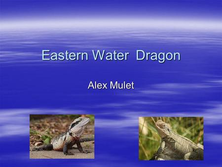 Eastern Water Dragon Alex Mulet Classification 1 There are five different groups of animals with vertebrates.  Mammals  Fish  Reptiles  Birds  Amphibians.