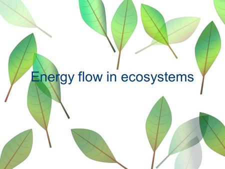 Energy flow in ecosystems. What is an ecosystem? System = regularly interacting and interdependent components forming a unified whole Ecosystem = an ecological.