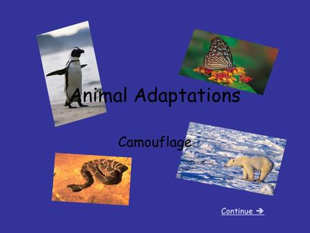 Animal Adaptations Camouflage Continue . Camouflage The ability to hide in your habitat or surroundings. A special adaptation that many animals have.
