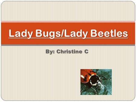 By: Christine C. What is the scientific name for lady bugs?  Coleputera/Coccinellidae.