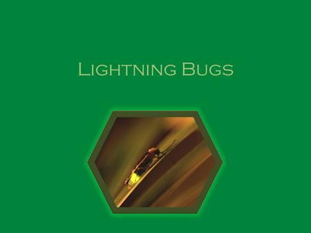 Lightning Bugs. Description Beetle 3 body segments – Head, Thorax, Abdomen Winged – Fore winged cover abdomen; hind wing membranous – Wings found on 2.