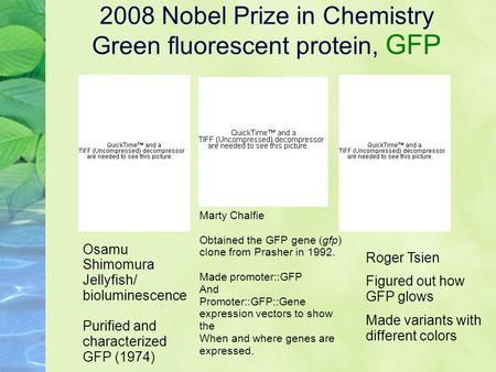 2008 Nobel Prize in Chemistry Green fluorescent protein, GFP Osamu Shimomura Jellyfish/ bioluminescence Purified and characterized GFP (1974) Marty Chalfie.