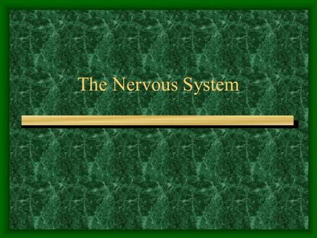The Nervous System. Major division - Central vs. Peripheral Central or CNS- brain and spinal cord Peripheral- nerves connecting CNS to muscles and organs.