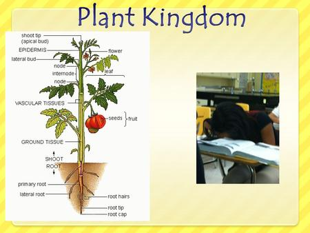 Plant Kingdom All plants are multicellular, with cell walls made of cellulose. Autotrophs- make own carbs for energy through photosynthesis.