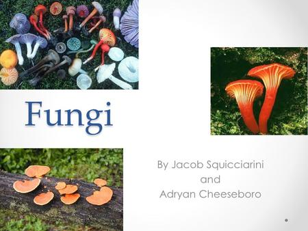 Fungi By Jacob Squicciarini and Adryan Cheeseboro.