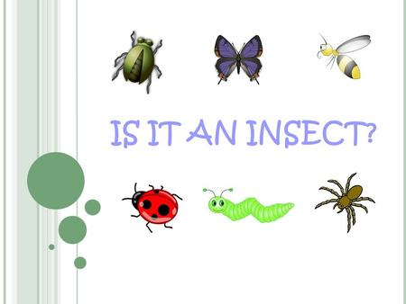 IS IT AN INSECT?. What Do You Know About Insects? What is your definition of an insect? Do you think that all ''bugs'' are insects why or why not? Now.