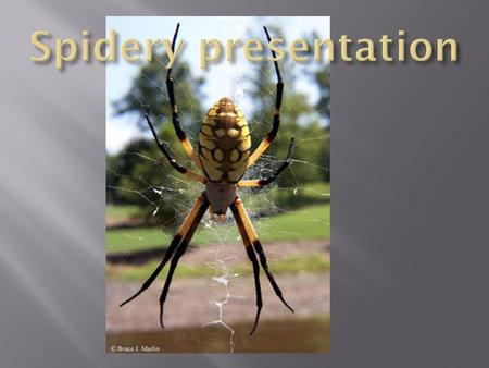 " ""The garden spider is very harmless to people. There are many kinds of garden spiders. The Garden Spider hunts first. It stays very still in the middle."