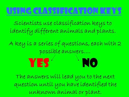 Using Classification Keys Scientists use classification keys to identify different animals and plants. YES A key is a series of questions, each with 2.