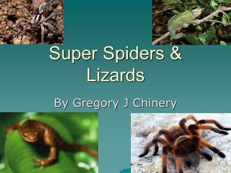 Super Spiders & Lizards By Gregory J Chinery Purse spiders make tubes for webs and build them alone side trees. They mix dirt with their silk to make.