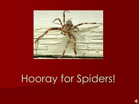 Hooray for Spiders! What do spiders look like? Spiders can be very large and have large webs.