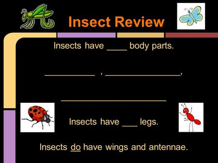 Insects have ____ body parts. __________, _______________, _____________________ Insects have ___ legs. Insects do have wings and antennae. Insect Review.