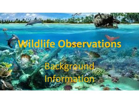Wildlife Observations Background Information. Mammals Mammals are endothermic – Endothermic – They produce their own body heat. They are vertebrates (they.