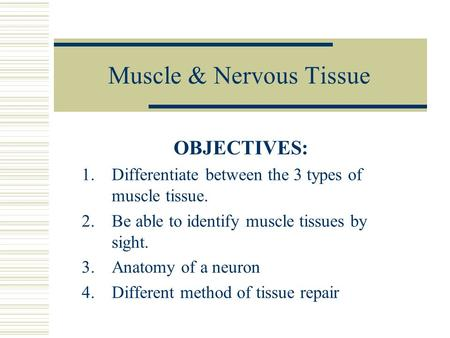 Muscle & Nervous Tissue OBJECTIVES: 1.Differentiate between the 3 types of muscle tissue. 2.Be able to identify muscle tissues by sight. 3.Anatomy of a.