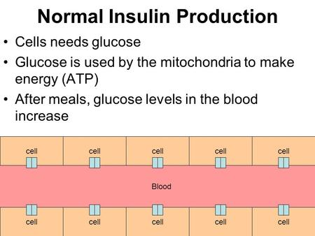 Normal Insulin Production Cells needs glucose Glucose is used by the mitochondria to make energy (ATP) After meals, glucose levels in the blood increase.