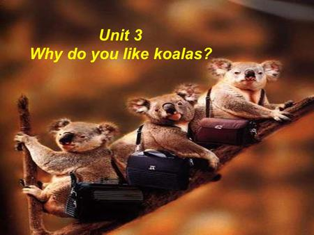 Unit 3 Why do you like koalas? zoo 动物园 animals 动物.