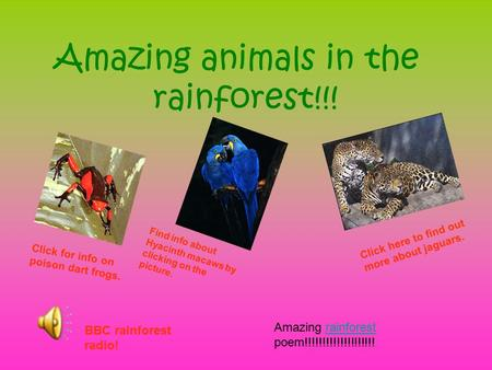Amazing animals in the rainforest!!! Click here to find out more about jaguars. Find info about Hyacinth macaws by clicking on the picture. Click for.