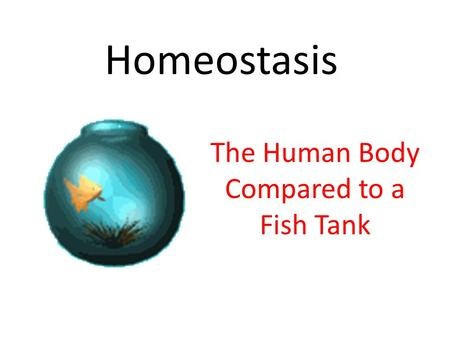 Homeostasis The Human Body Compared to a Fish Tank.