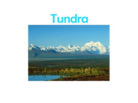 Tundra. Facts about the Tundra *The tundra is very cold. The ground is always frozen. That is called permafrost.