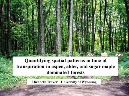 Elizabeth Traver University of Wyoming Quantifying spatial patterns in time of transpiration in aspen, alder, and sugar maple dominated forests.